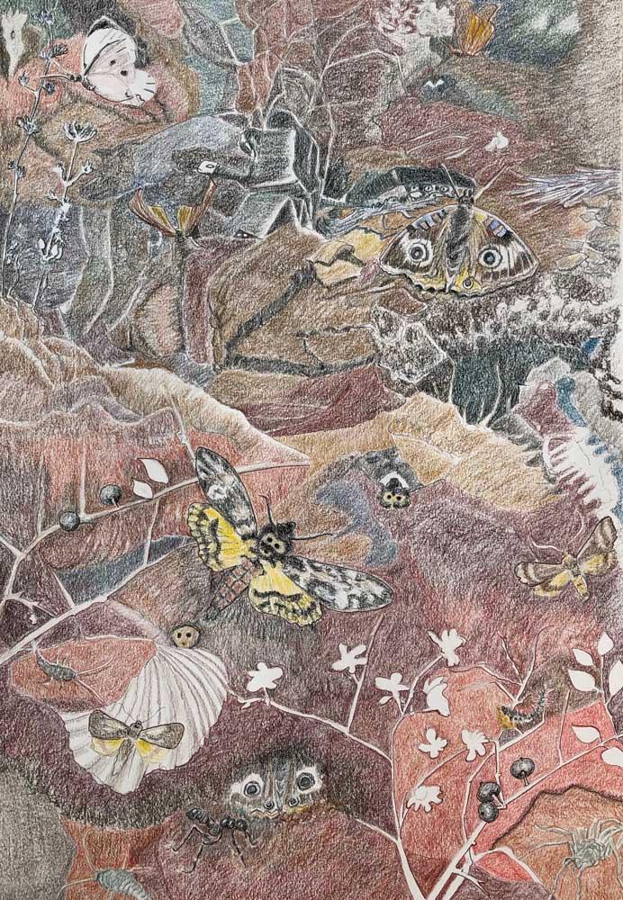 Tegning af Sommerfugledalen sonet nr 3