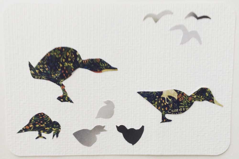 Fugle På Kort – Kort Med Klip