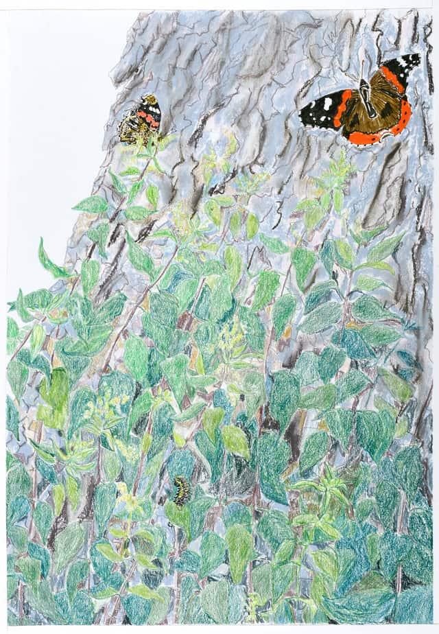 Tegning af Sommerfugledalen anden sonet