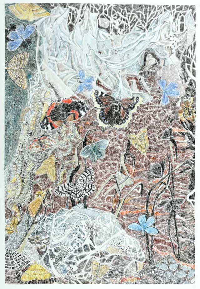 Sommerfugledalen, tegning af fjerde sonet