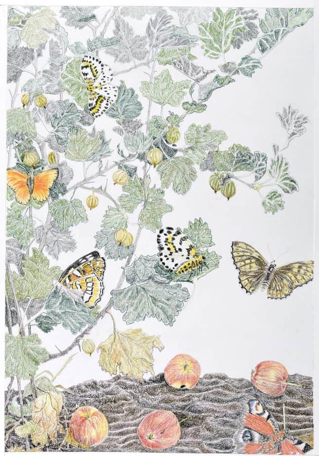 Tegning af Sommerfugledalen sjette sonet