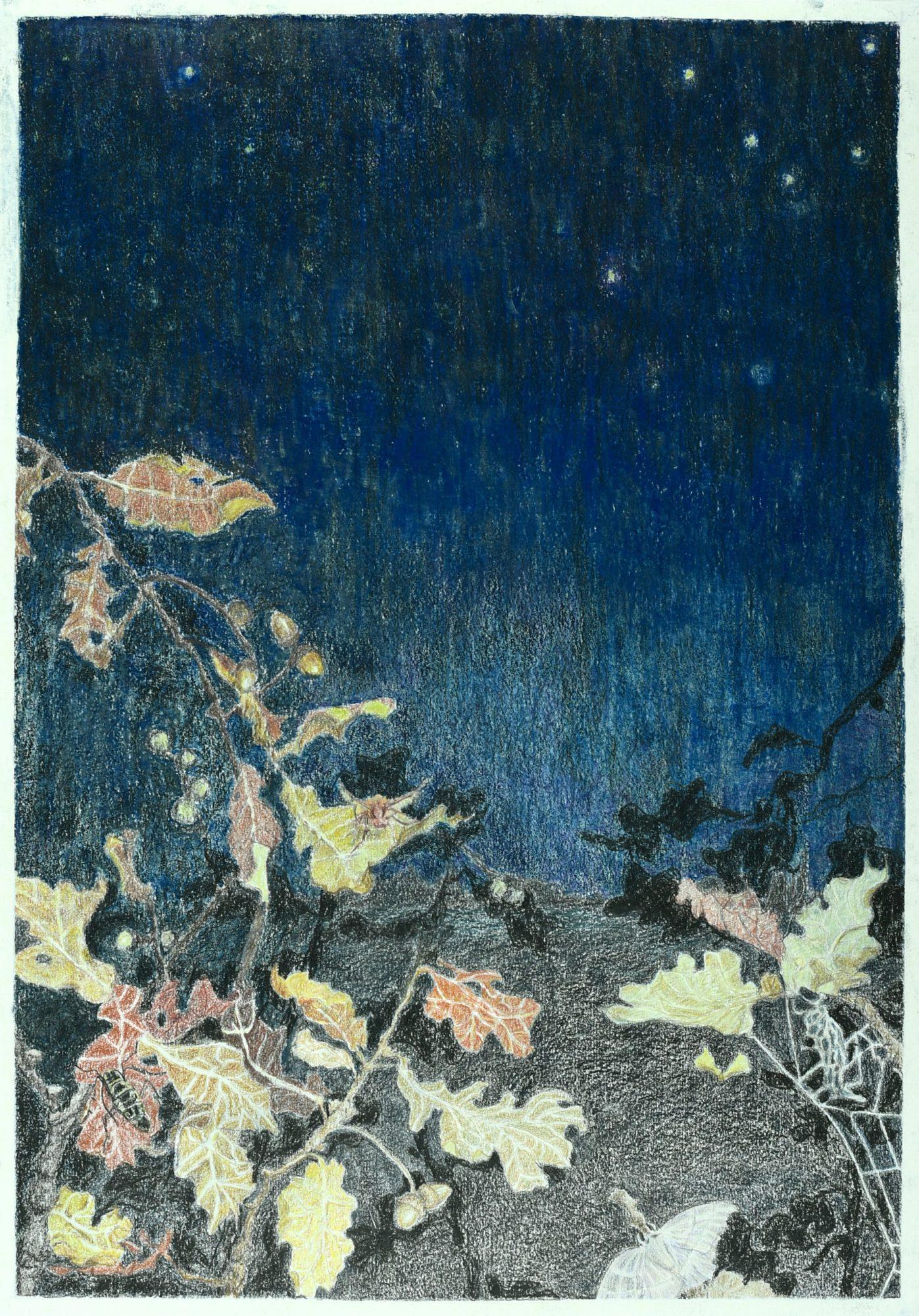 Sommerfugledalen, tegning af tolvte sonet