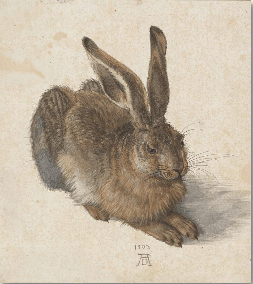 Haren Malet Med Akvarel Af Albrecht Dürer