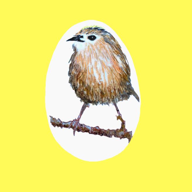 Fuglekonge